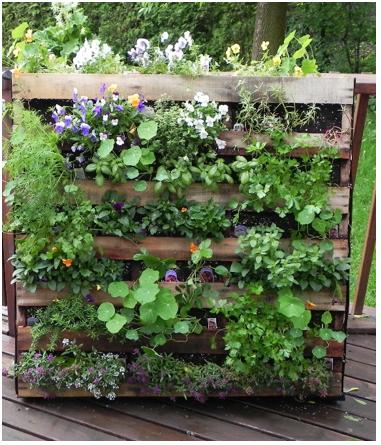 Mur v g talis jardin daniel a s guin - Realiser un mur vegetale avec des palettes en bois ...