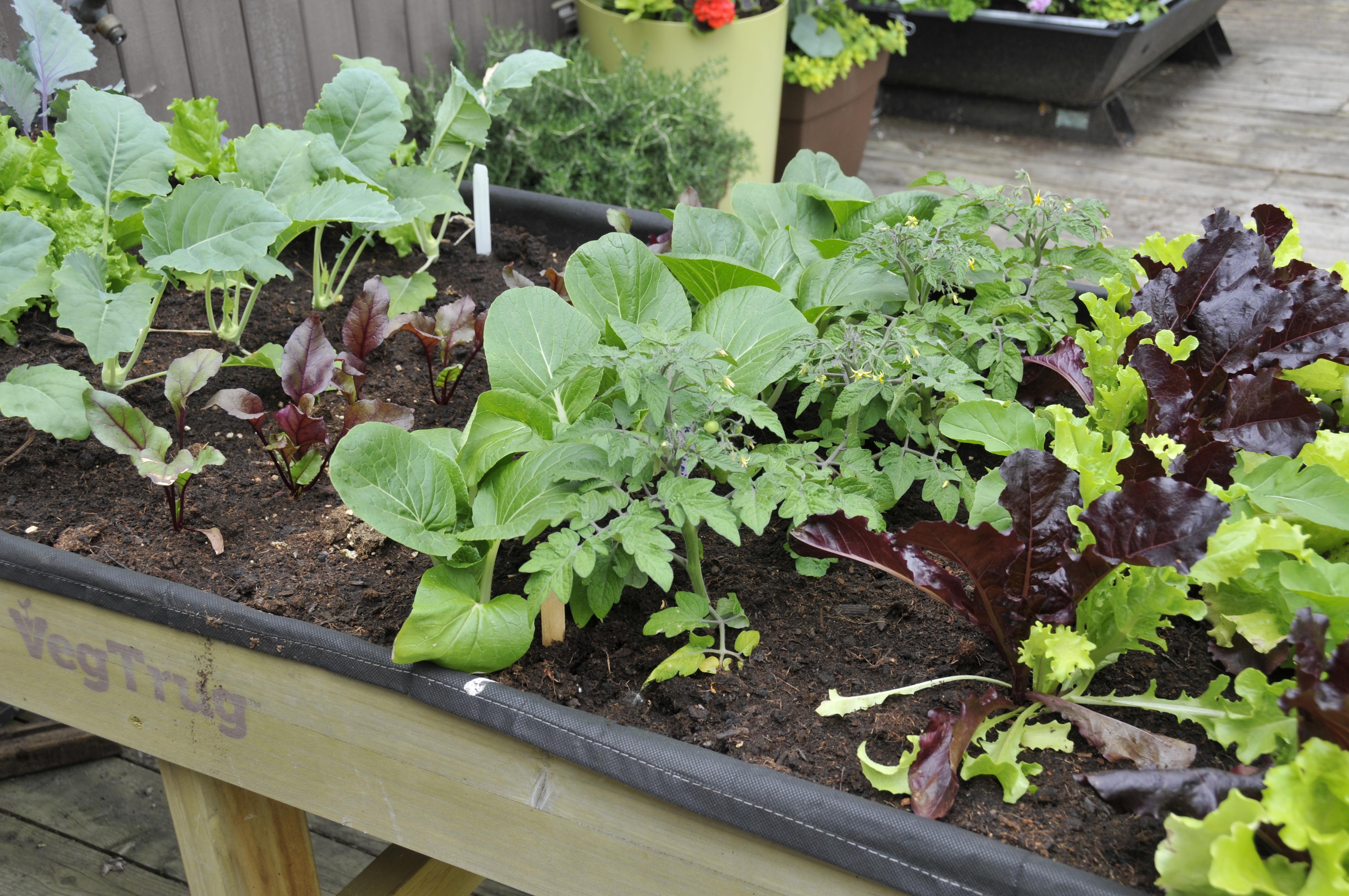 Plan Pour Fabriquer Une Table De Jardin réalisez une table potagère ! | jardin daniel a. séguin