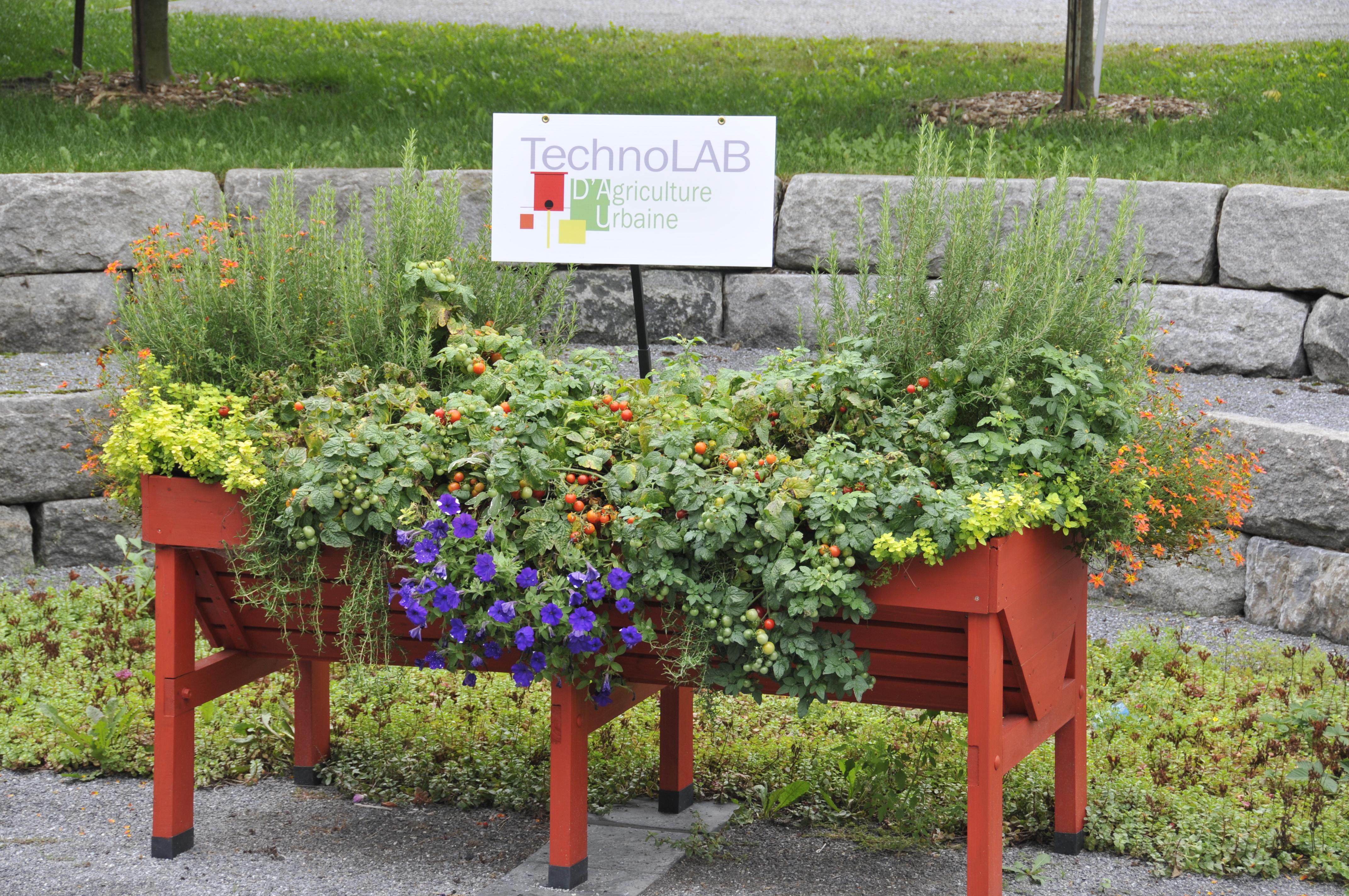 Potager Murale Pour Tres Peu Place la table potagère | jardin daniel a. séguin