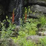 La cascade - Espace Aiglon Indigo